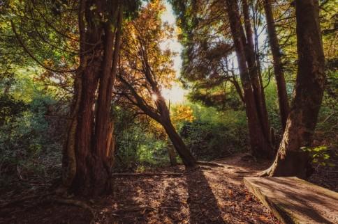 Moseley Bog Woodland