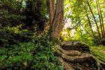 Moseley Bog Tree