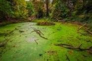Moseley Bog Pool