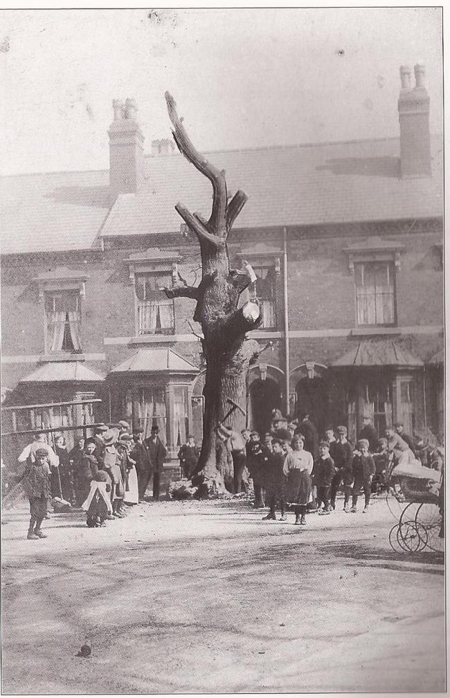 "Photo 8 – The Selly Oak in Oak Tree Lane being cut down in 1909. The house behind the tree is now ""Brevitts"" solicitors."