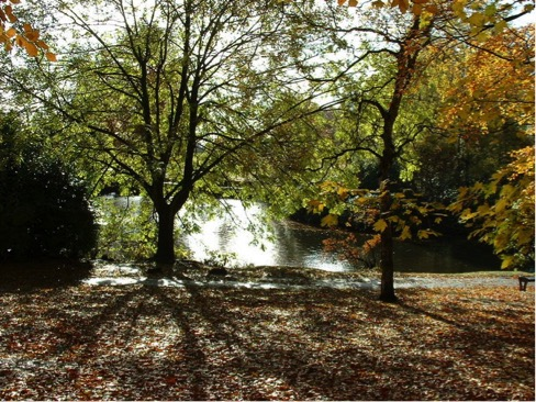 Photo 5 – This autumnal scene shows Moseley New Pool in Swanshurst Park, but it has been known by other names in the past, including Swanshurst Lady Pool and Grove Pool. Coldbath Brook was dammed to create the New Pool as a fish pond in or before 1758. In its hey day Swanshurst Park had a boathouse with boats to hire, a pitch and putt golf course, changing rooms for sports, toilets and a cafe.